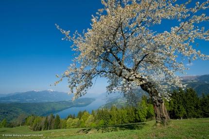 Der Millstätter See – Urlaub in Kärnten am See – Pension Elisabeth – Frühstückspension am See